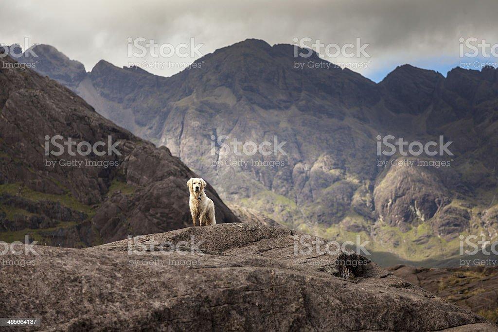 Adventure Dog stock photo