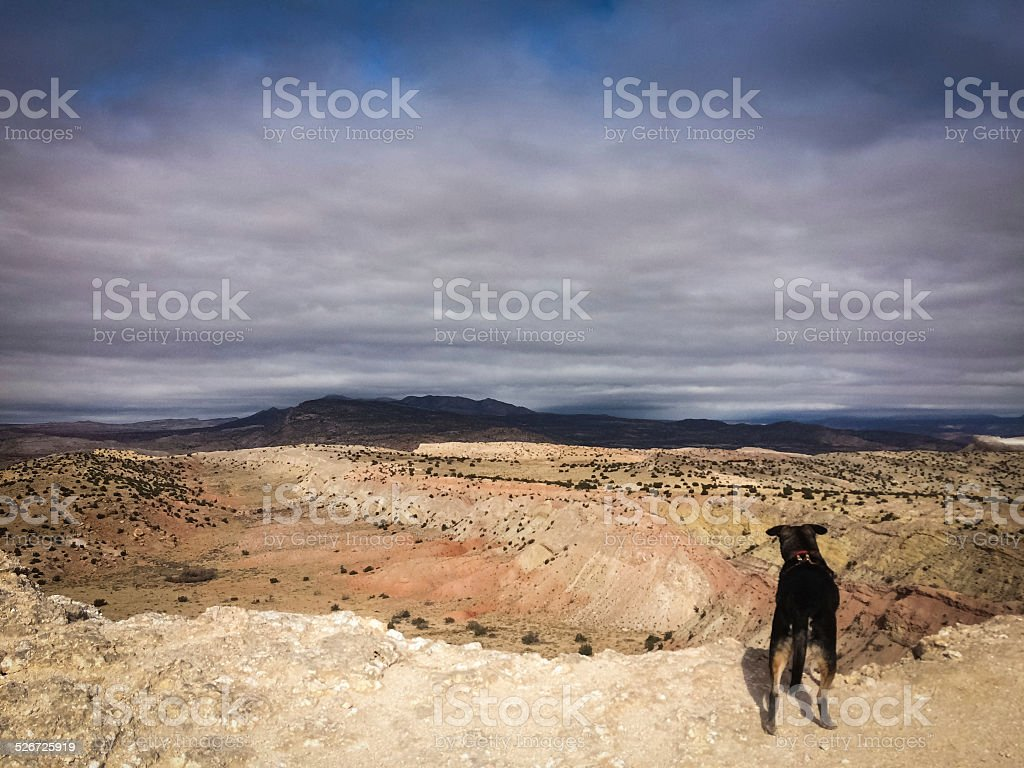adventure dog stock photo