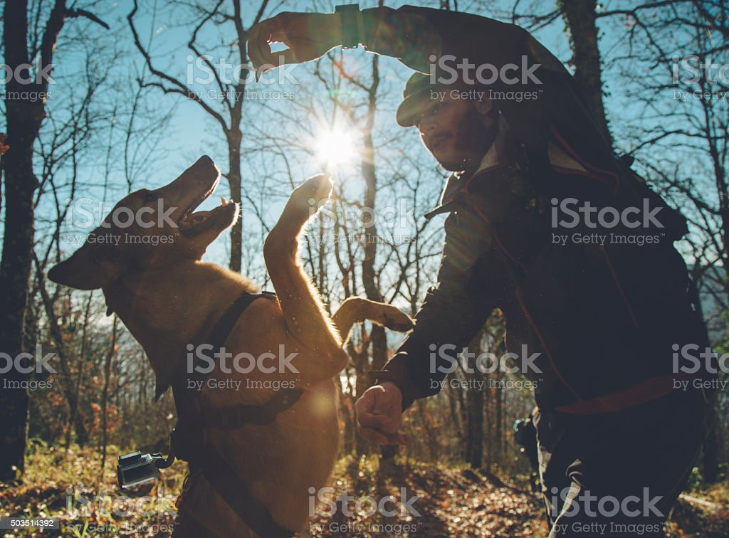 Adventures in the woods: reward the dog stock photo