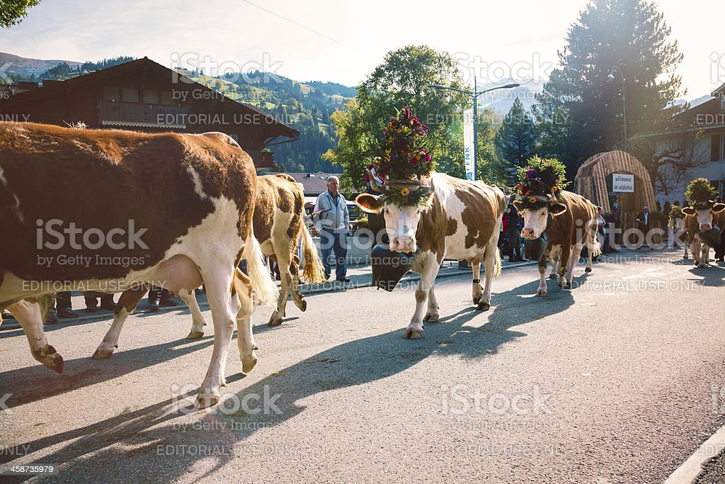 Aelplerfest decorated Simmental cow parade royalty-free stock photo