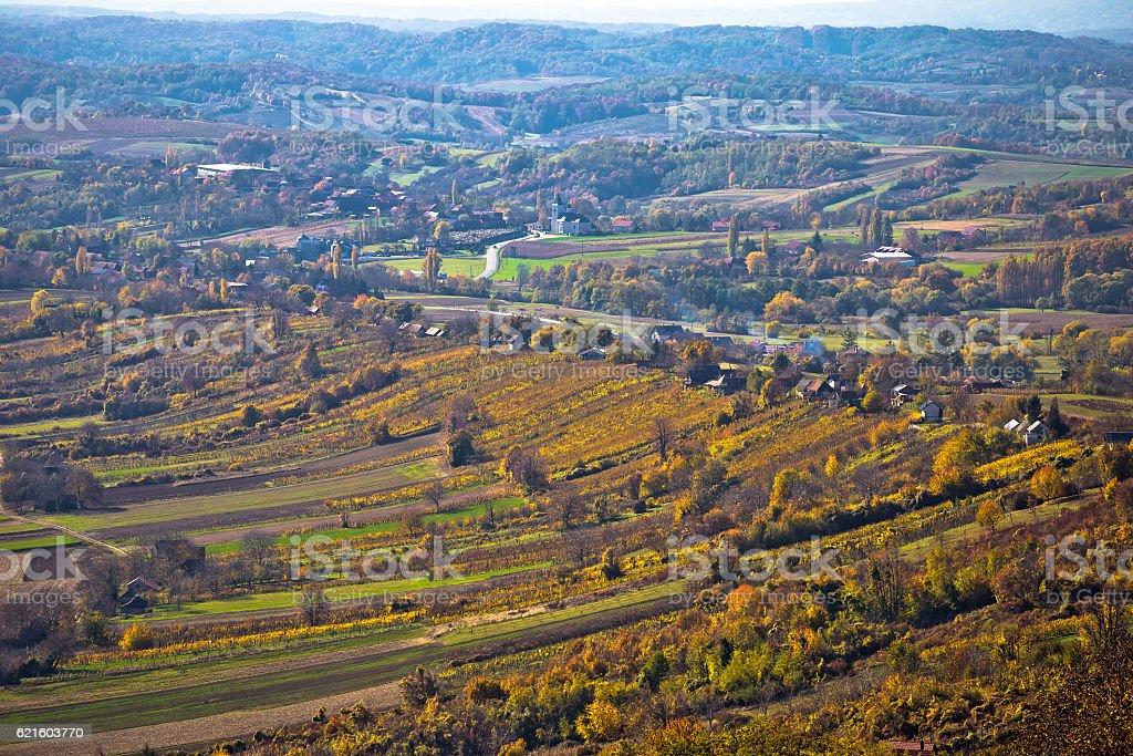 Aerial autumn view of vineyard region stock photo