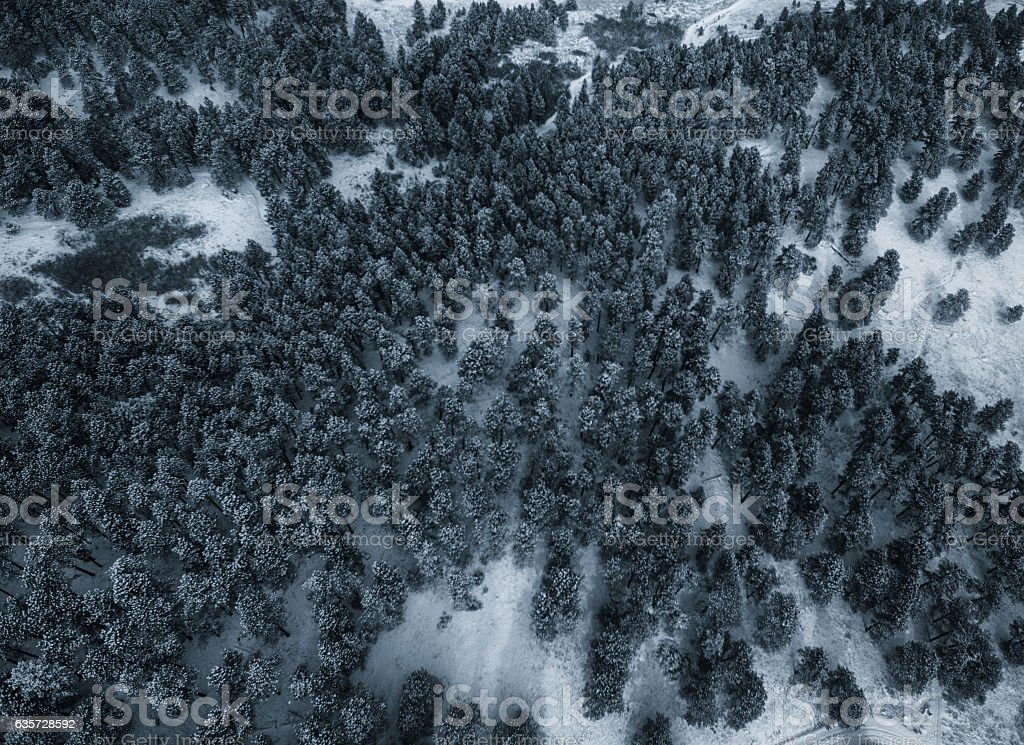 Aerial drone photo.  Snow covered evergreen trees after a blizzard stock photo