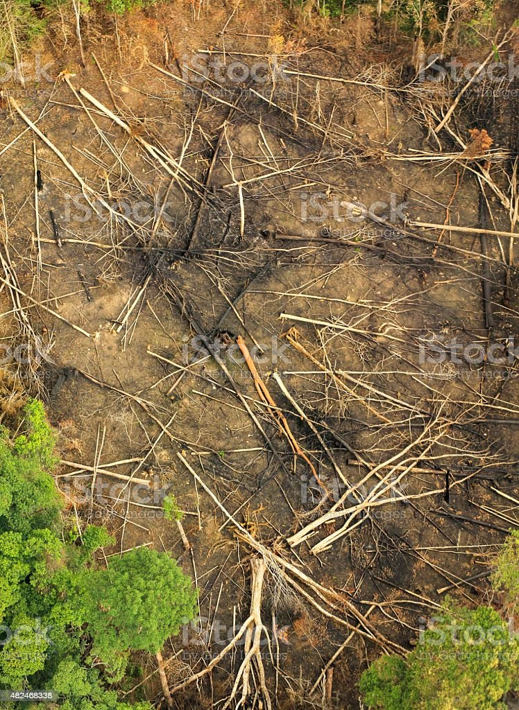 Aerial of clear cut landscape with cut trees on ground stock photo