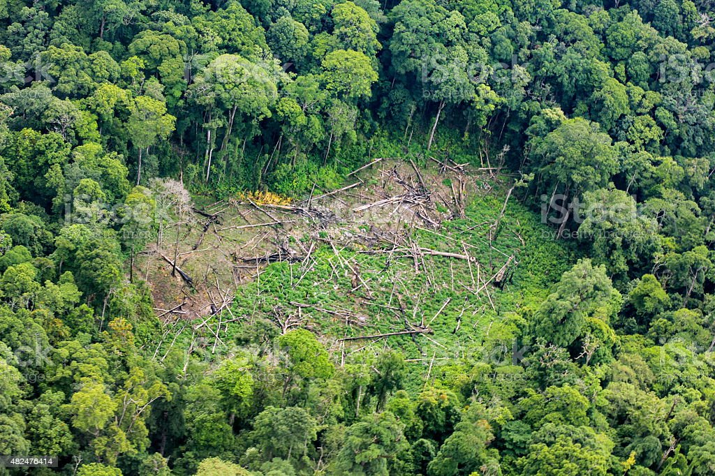 Aerial of  cut trees on ground in rainforest stock photo