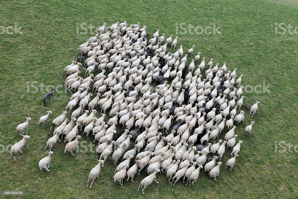 Aerial photo of farm animal royalty-free stock photo