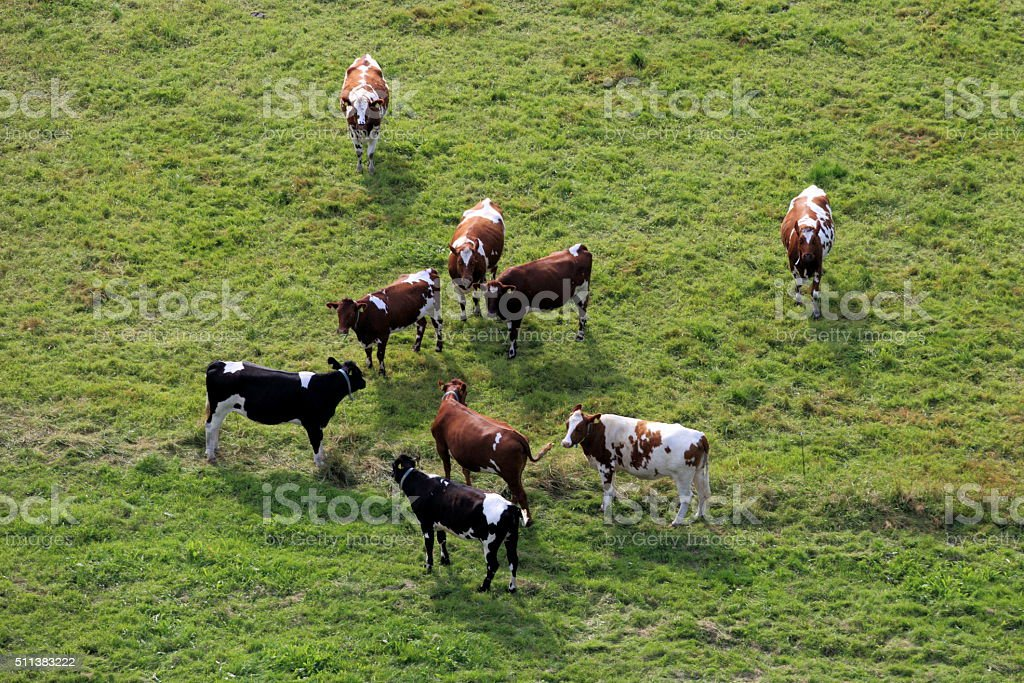 Aerial photo of farm animal stock photo