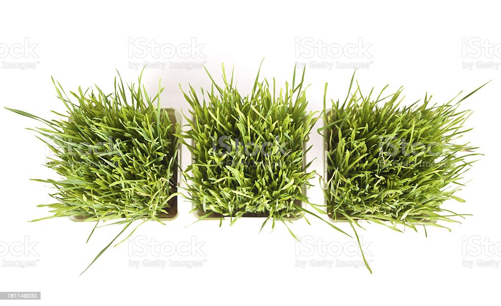 Aerial Photo Of Wheat Grass Healthy Raw Food Against White stock photo