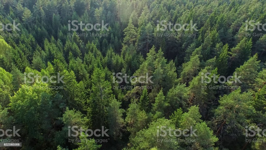 Aerial Shot of a Beautiful Dense Summer Forest on a Sunny Day. stock photo