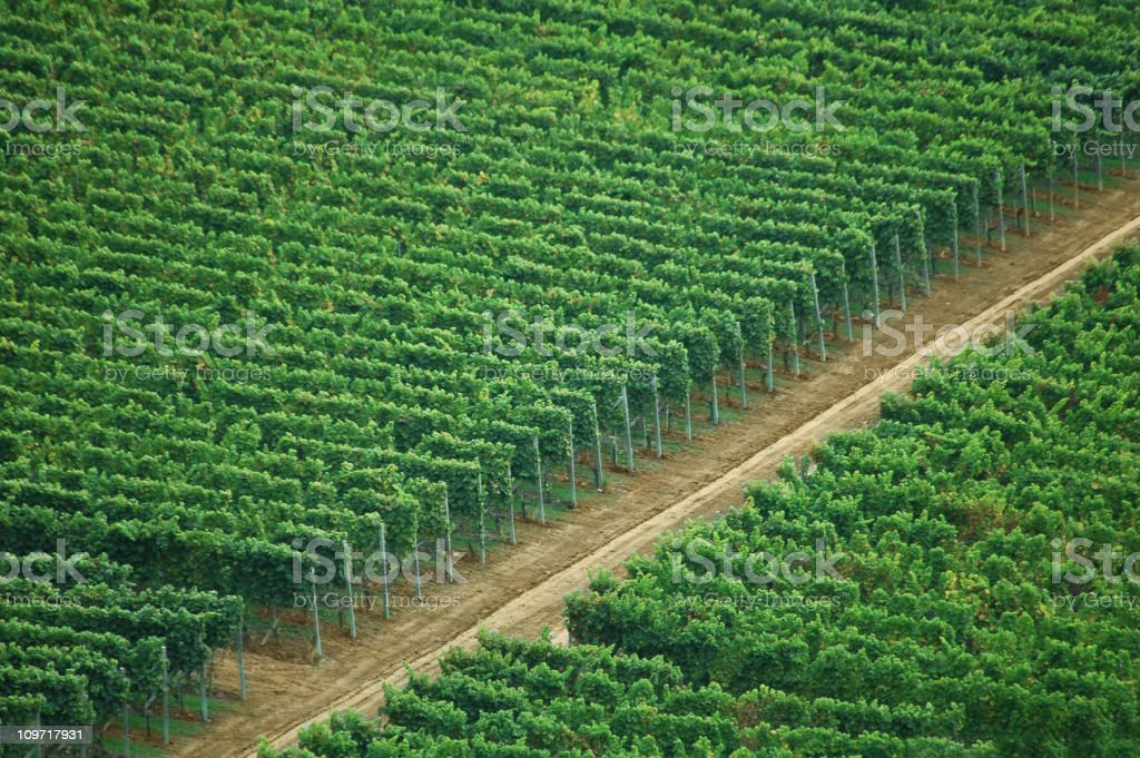 Aerial Shot of Pathway in Green Vineyards royalty-free stock photo