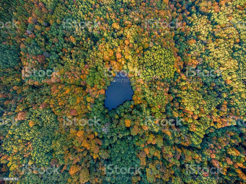 Aerial top view. Autumn  landscape. Wild forest lake. stock photo