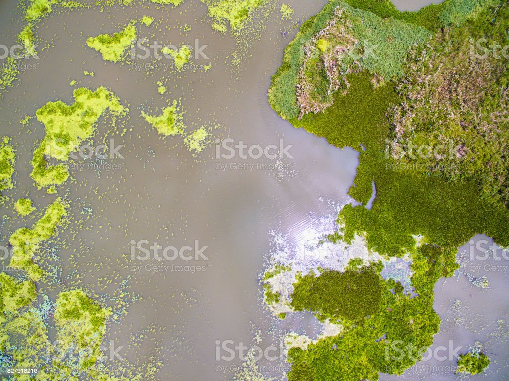 Aerial view abstract of green duckweed and water lettuce stock photo