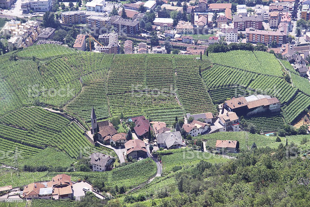 Aerial view at wine-yard in Italy royalty-free stock photo