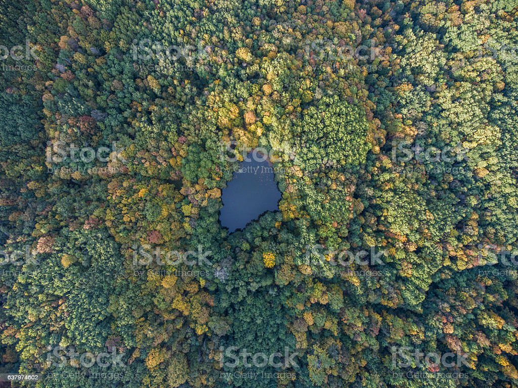 Aerial view. Autumn landscape. Wild forest lake. stock photo