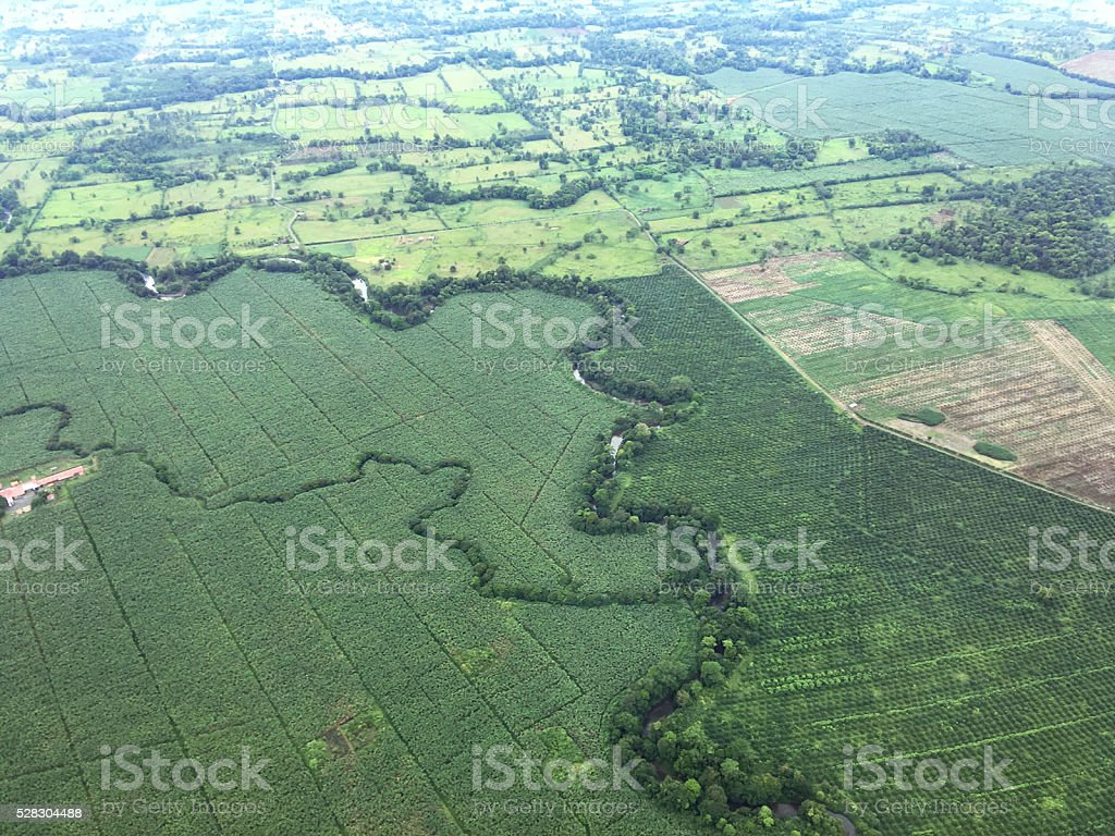 aerial view banana and coconut palm plantations, Costa Rica stock photo