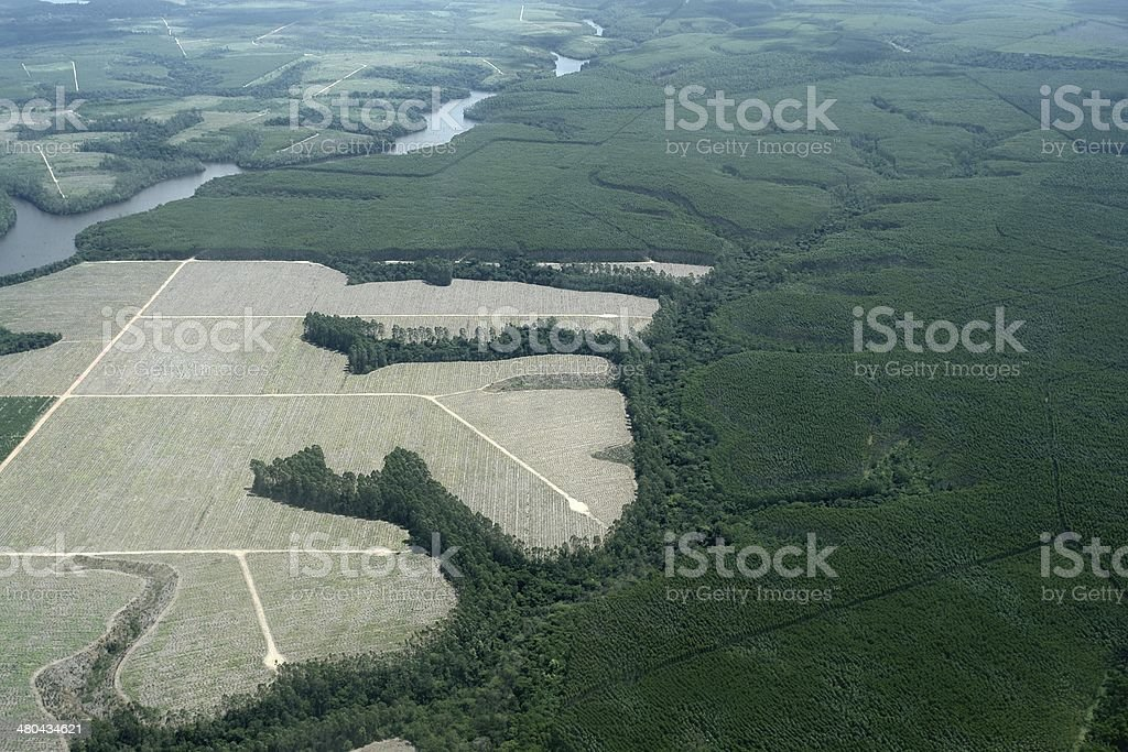 Aerial view enewable forest with eucalyptus trees in Brazil stock photo
