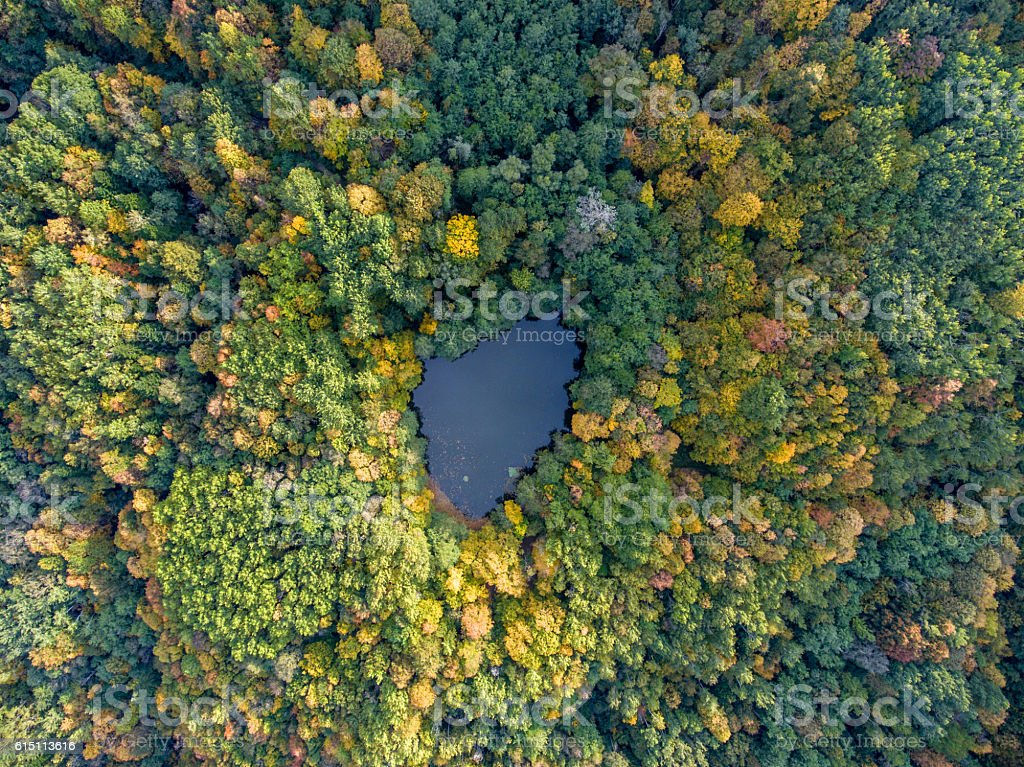 Aerial view. Forest lake in Russia. stock photo