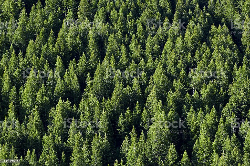 Aerial view of a forest full of palm trees stock photo