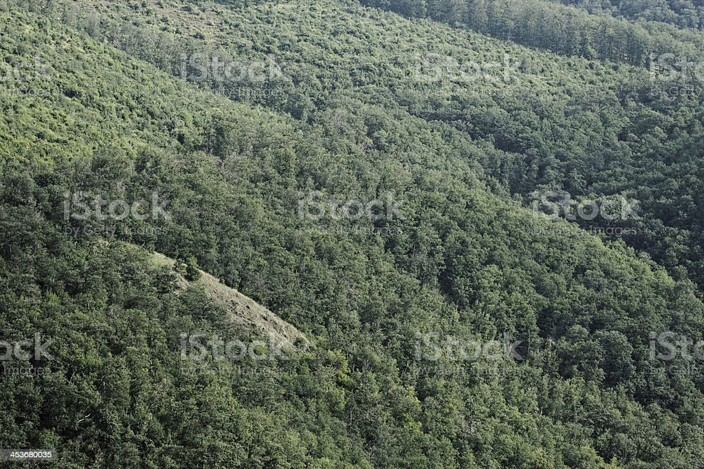 aerial view of a forest royalty-free stock photo