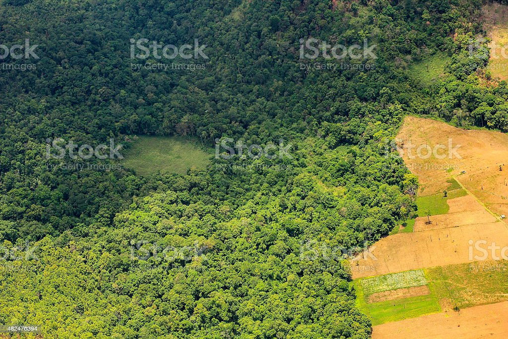 aerial view of a large  field eating into the rainforest stock photo