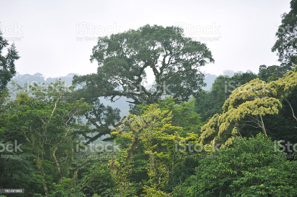 Aerial view of a rainforest canopy during the daytime royalty-free stock photo
