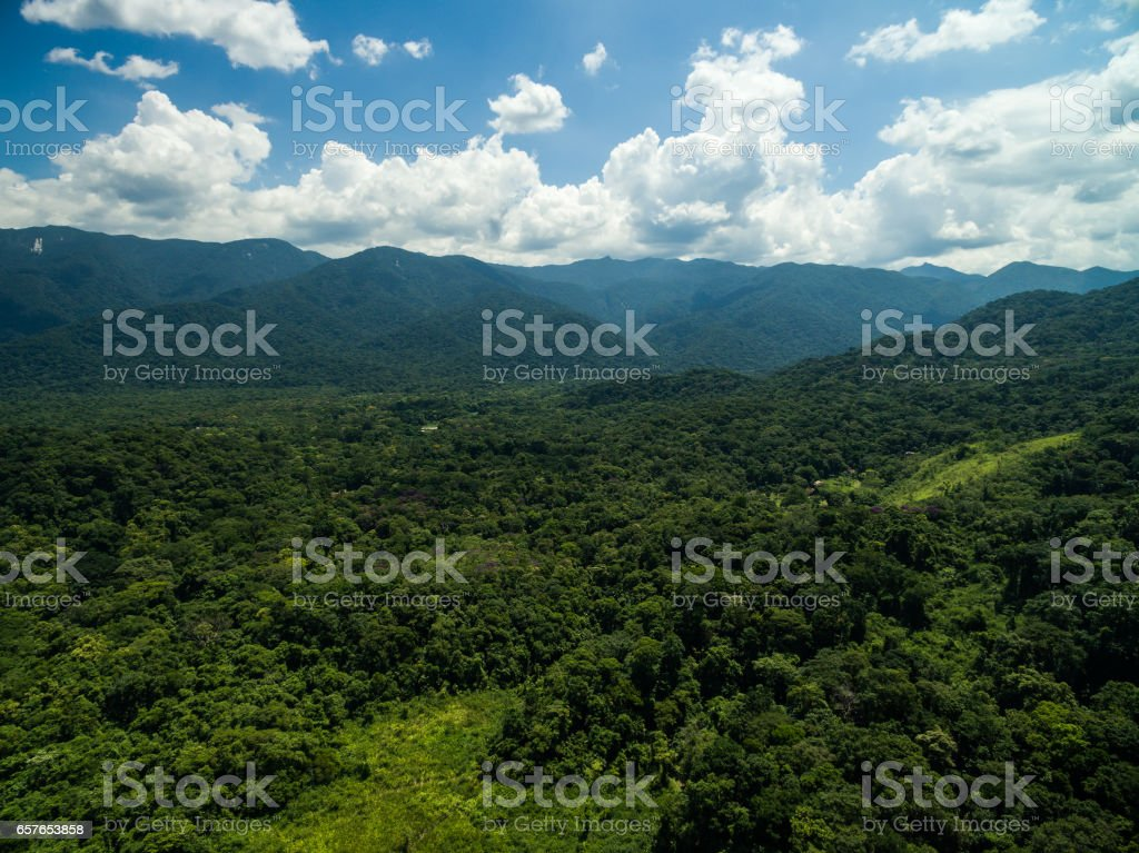 Aerial View of a Rainforest stock photo
