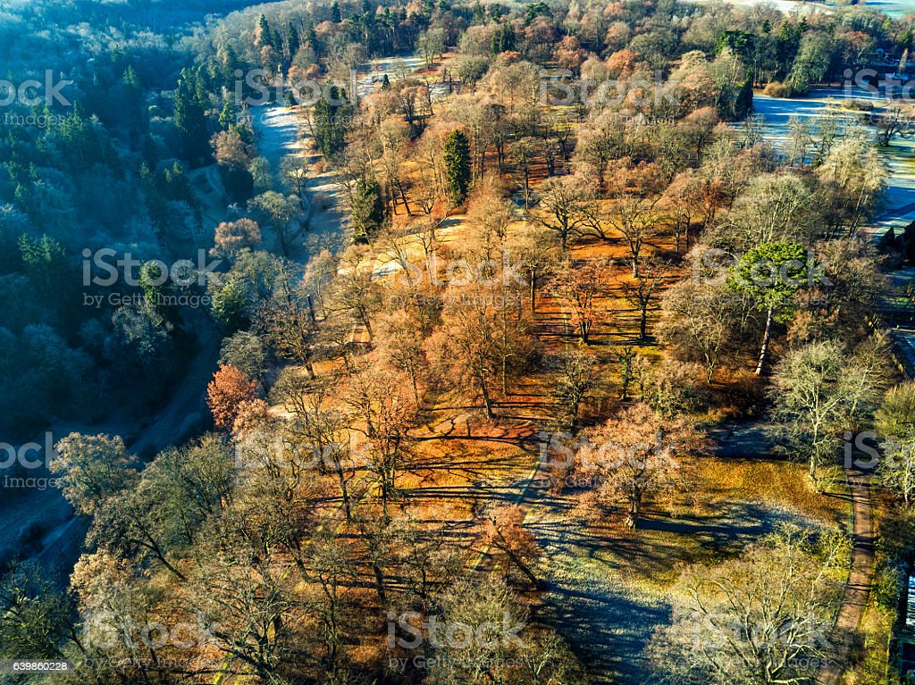 Aerial view of a winter landscape with trees stock photo