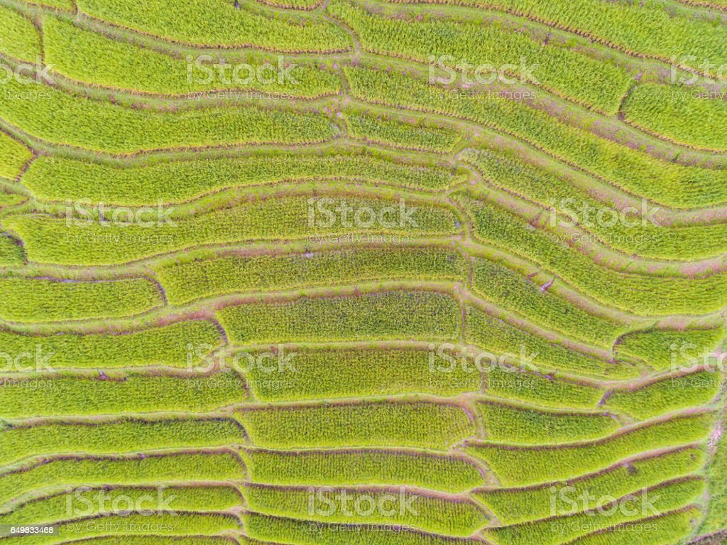 Aerial view of beautiful rice terrace in a mountain stock photo