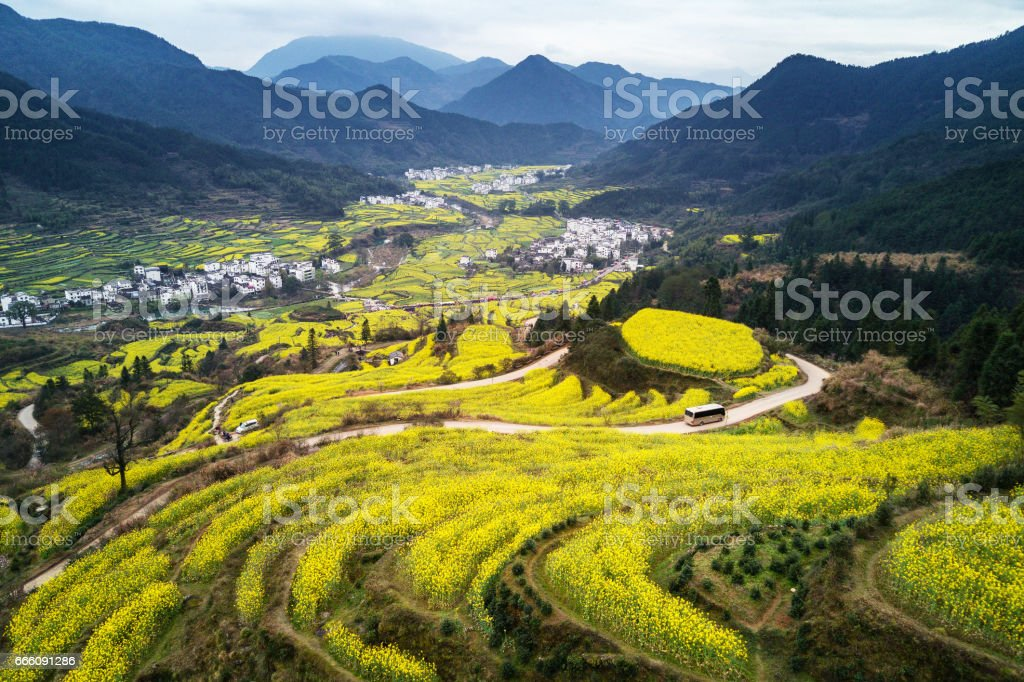 Aerial view of canola field curve at Jiangling, China. stock photo