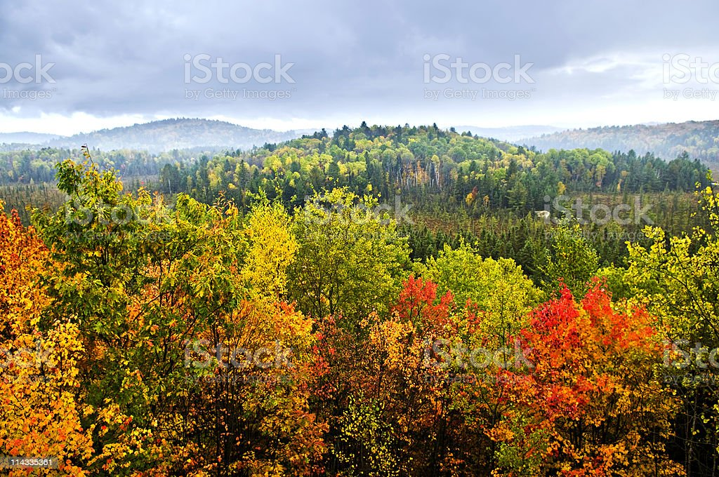 Aerial view of fall forest treetops stock photo