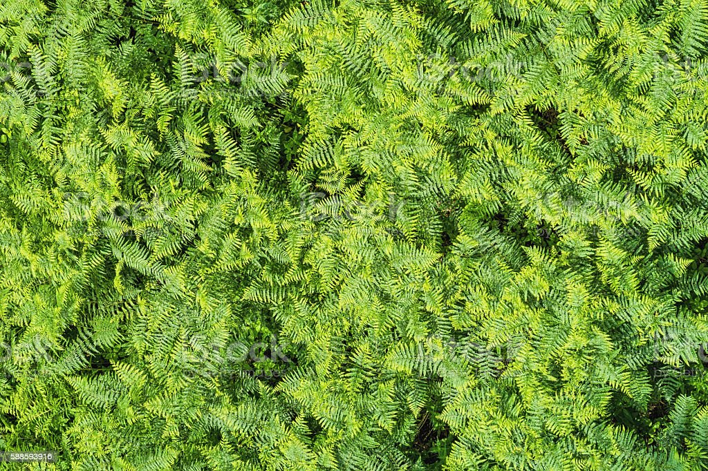 Aerial view of fern in a forest - nature background stock photo