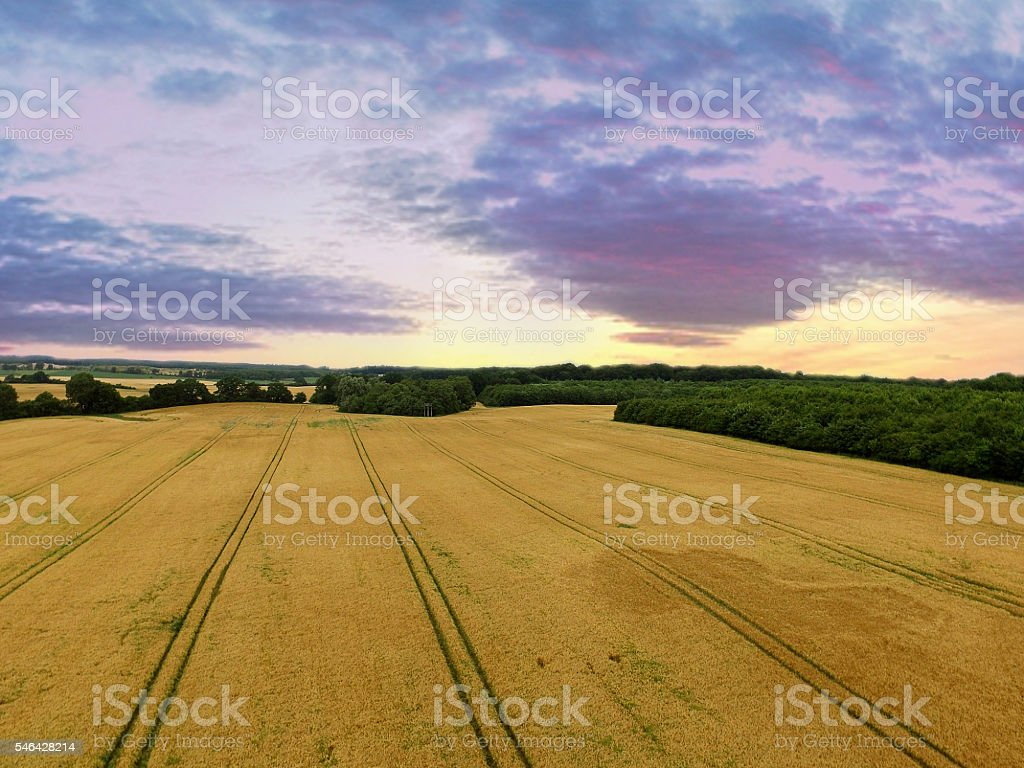 aerial view of golden wheat fields in sunset stock photo