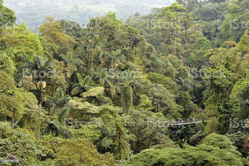 Aerial view of hanging bridge in the jungle, Costa Rica stock photo
