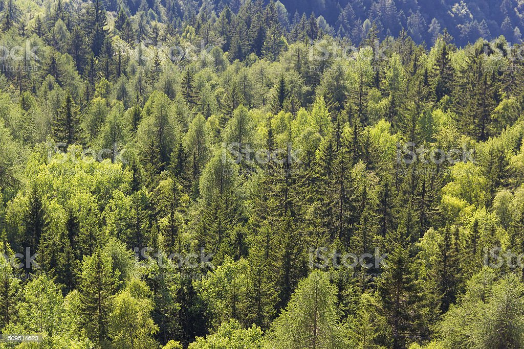 Aerial View of Mountain Trees in the Italian Alps, Summer stock photo