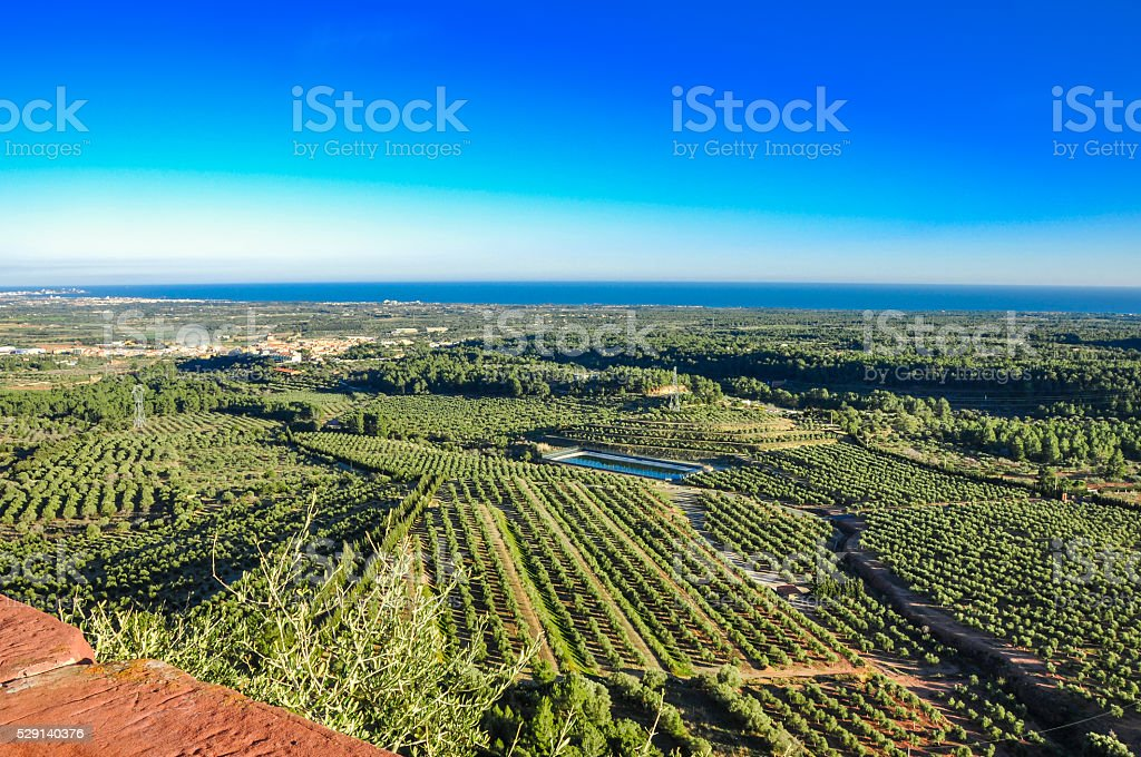 Aerial view of olive groves. Mont-Roig del Camp (Spain). stock photo