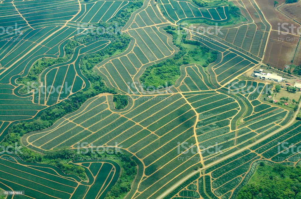 aerial view of pineapple fields in Costa Rica stock photo