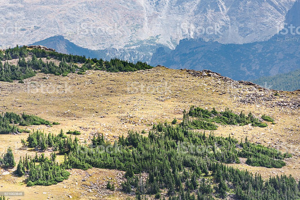 Aerial View of Plains between Pine Forests in Rocky Mountains stock photo
