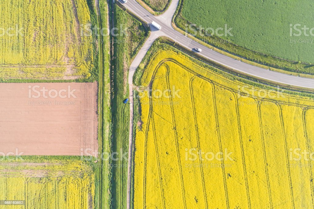 Aerial view of rape field stock photo
