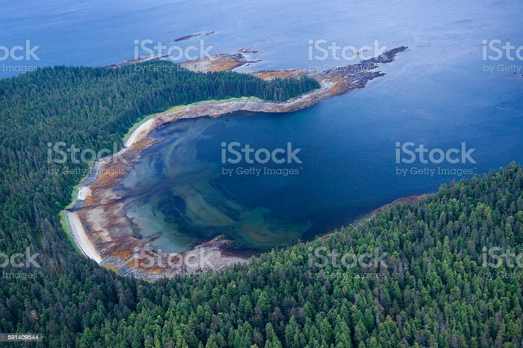 Aerial view of sitka and spruce trees, Tongass National Park stock photo