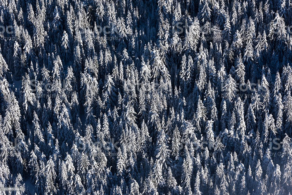 Aerial view of snow covered trees stock photo