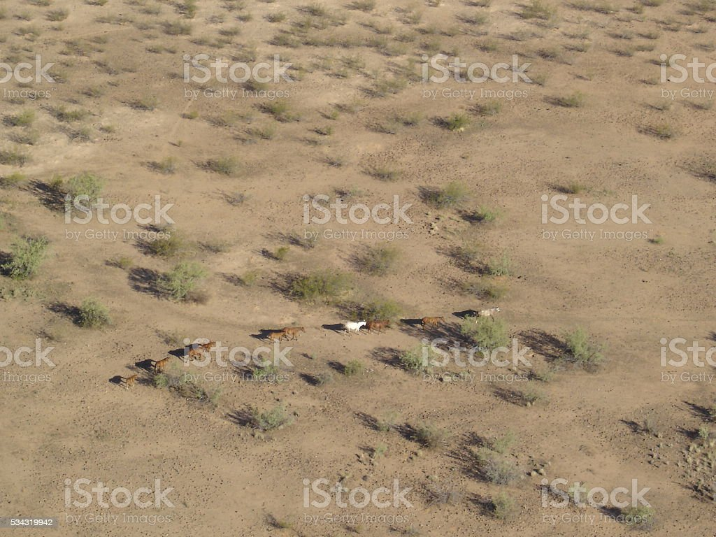 Aerial View of Stampede stock photo