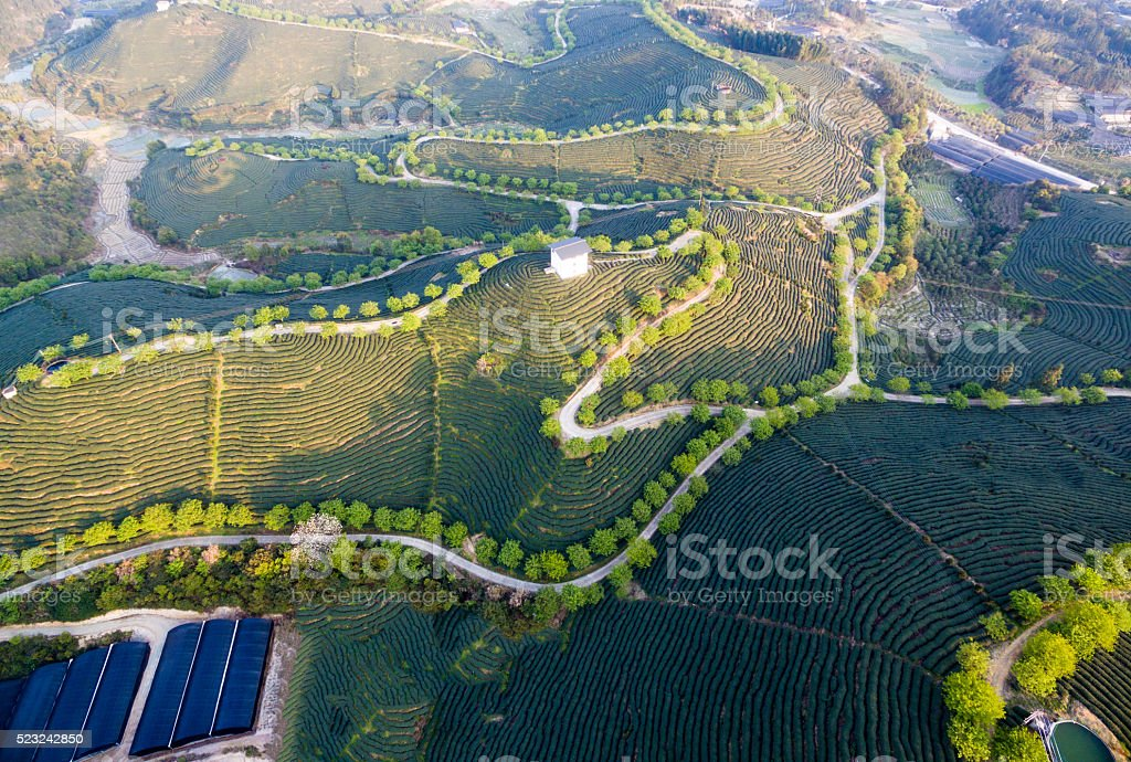 Aerial view of tea plantation in china, Asia stock photo