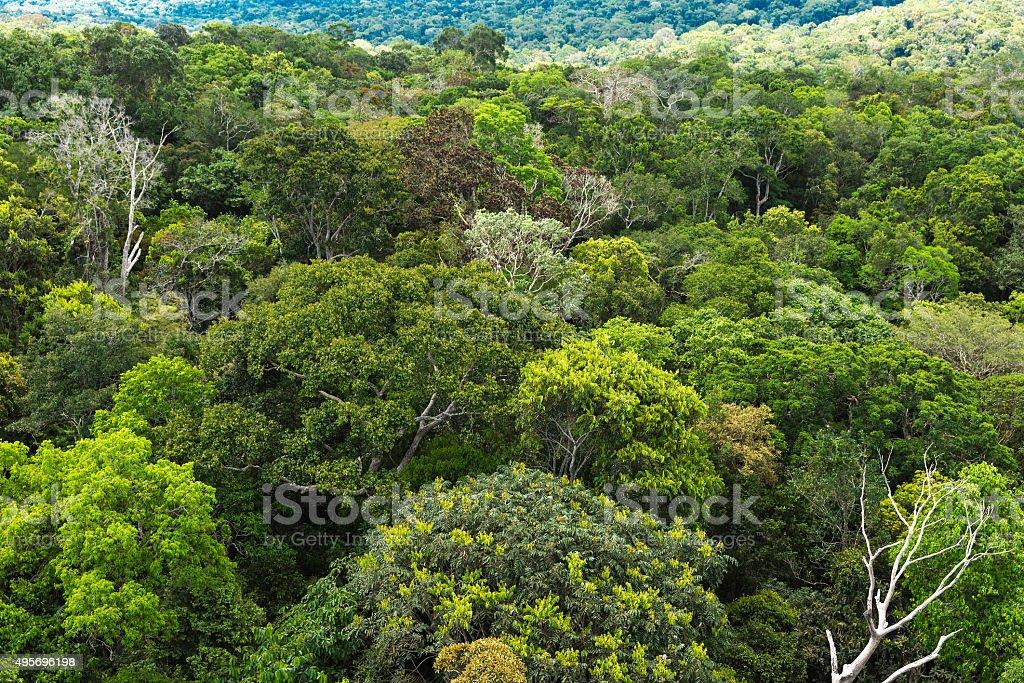 Aerial view of the Amazon rainforest, Brazil stock photo