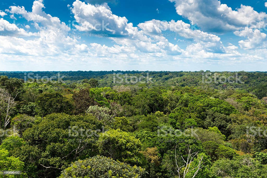 Aerial view of the Amazon rainforest, Brazil stock photo