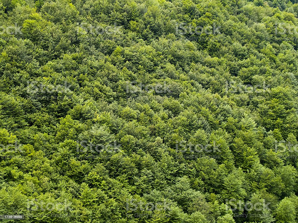 Aerial view of the tops of trees in a forest stock photo
