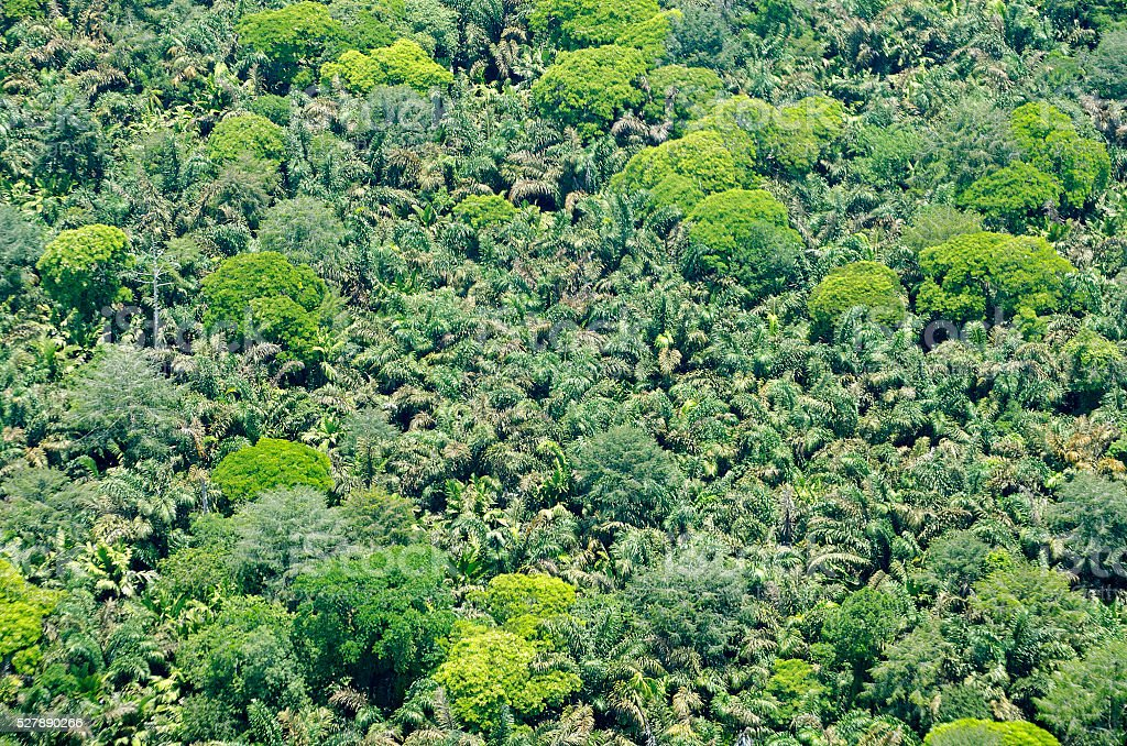 aerial view of tropical forest, Tortuguero National Park, Costa Rica stock photo
