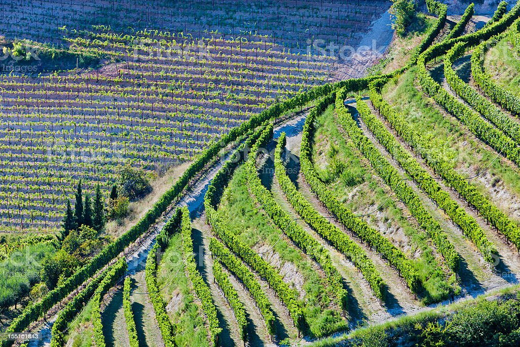 Aerial view of Valpolicella Vineyards in Italy stock photo