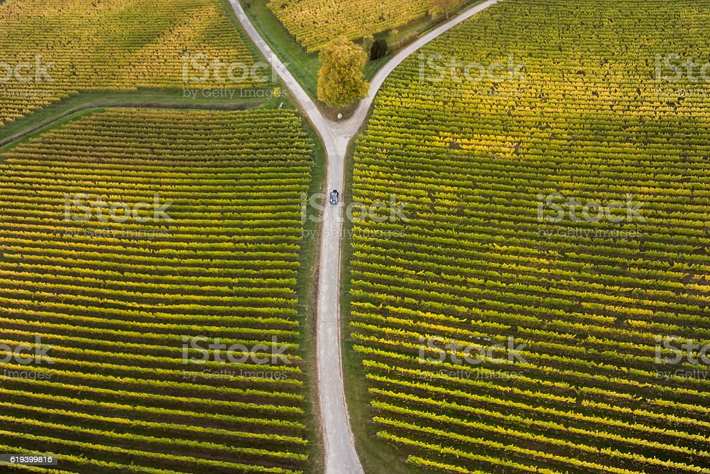 Aerial view of vineyards and fork in the road stock photo