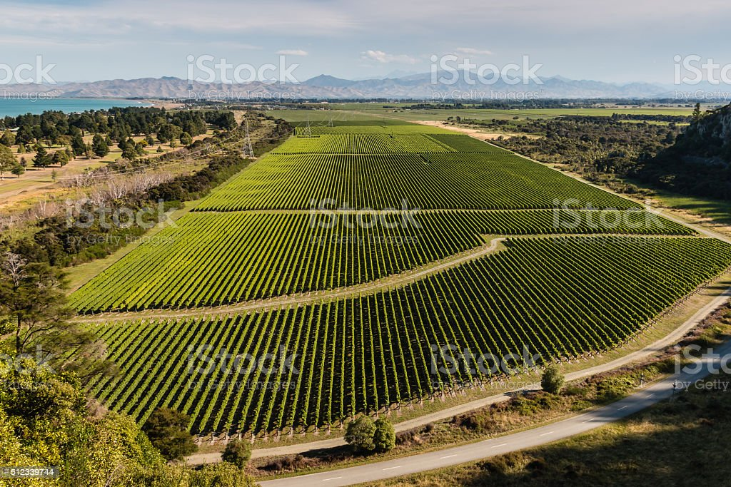 aerial view of vineyards at Wairau valley stock photo