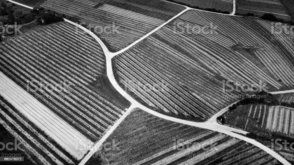 Aerial view of vineyards in spring stock photo