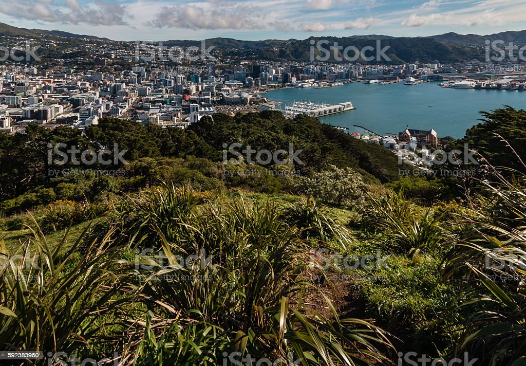aerial view of Wellington centre and harbour stock photo